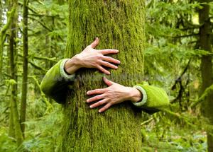 hugging-tree[1]