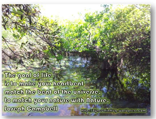 The goal of life is to match your heartbeat to the universe, to match your nature with Nture. ~Joseph Campbell