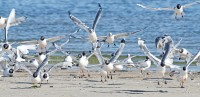 gulls1[1]