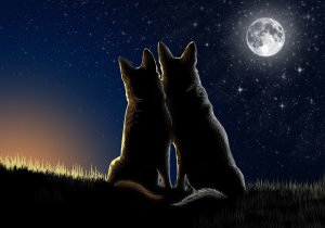 love_in_the_full_moon_by_italianwolfranch-d5hduu6[1]