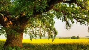 sync tree sunlight