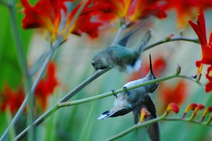 sync hummingbirds