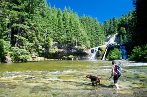 wading river man dog forest