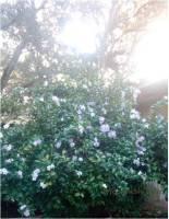 ydaytodaytom bush ms